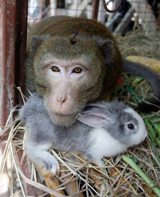 Απίθανες φιλίες ζώων (19)