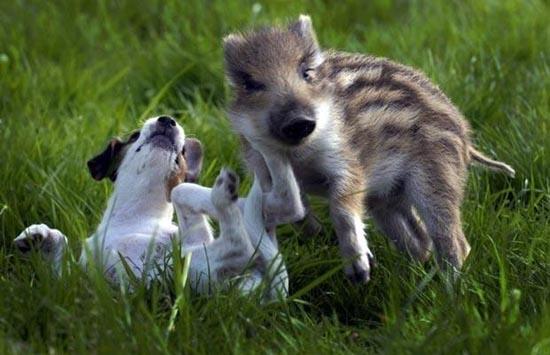 Απίθανες φιλίες ζώων (20)