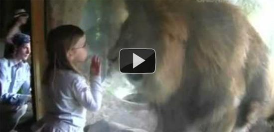 Ατρόμητη 3χρονη εναντίον λιονταριού