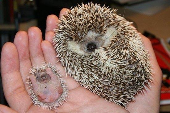 Αξιολάτρευτες φωτογραφίες ζώων (5)