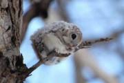 Αξιολάτρευτες φωτογραφίες ζώων (8)