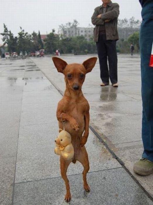 Αξιολάτρευτες φωτογραφίες ζώων (9)