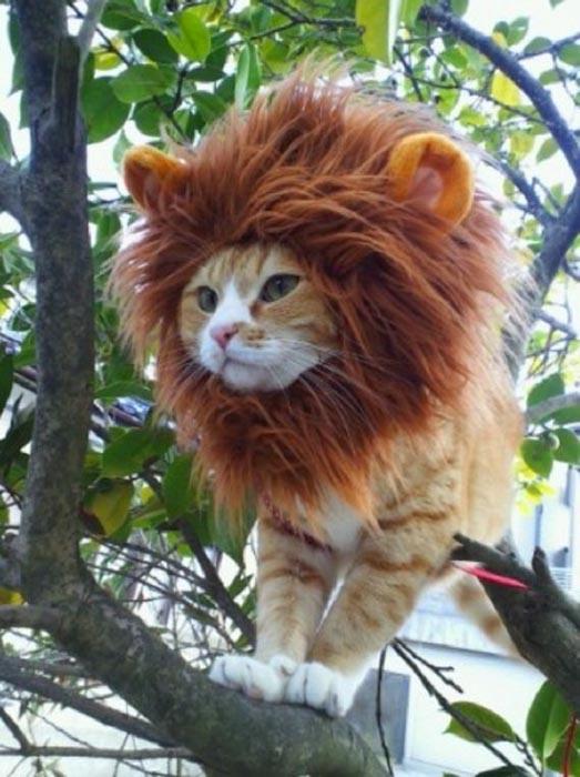 Αξιολάτρευτες φωτογραφίες ζώων (10)