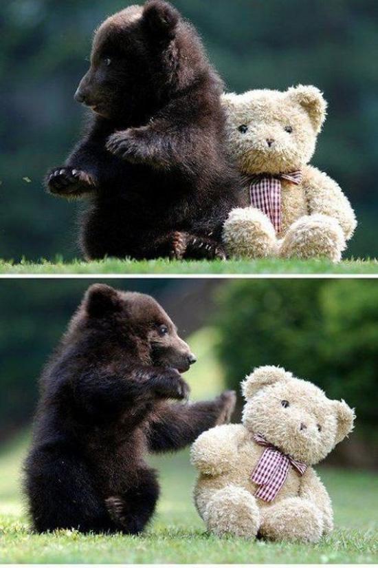 Αξιολάτρευτες φωτογραφίες ζώων (12)