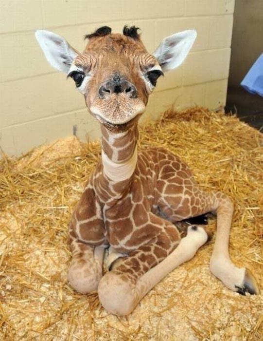 Αξιολάτρευτες φωτογραφίες ζώων (13)