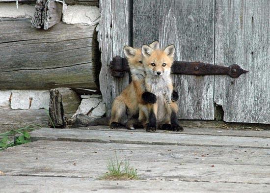 Αξιολάτρευτες φωτογραφίες ζώων (14)