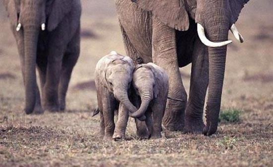 Αξιολάτρευτες φωτογραφίες ζώων (17)