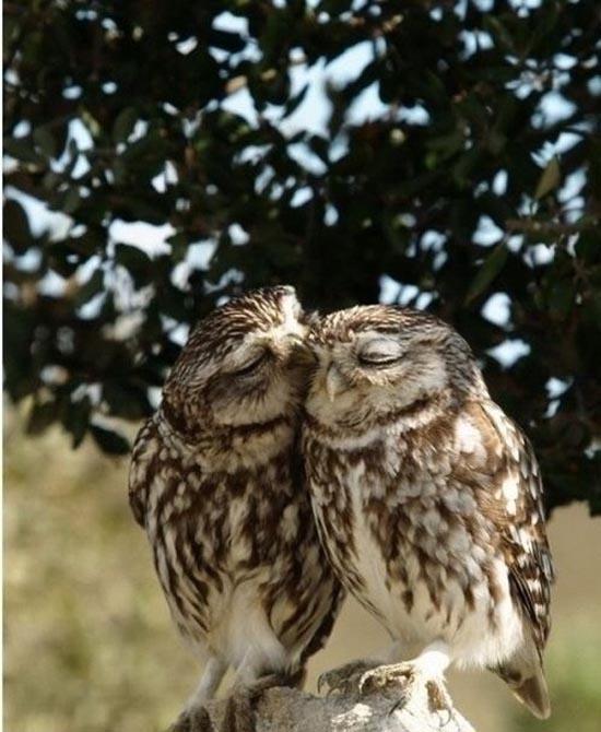 Αξιολάτρευτες φωτογραφίες ζώων (20)