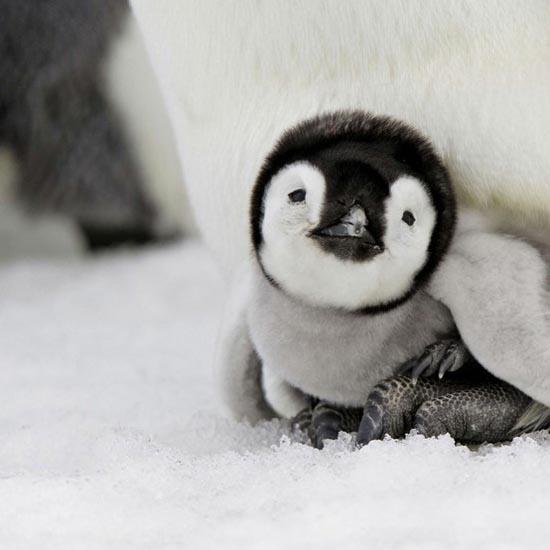 Αξιολάτρευτες φωτογραφίες ζώων (21)