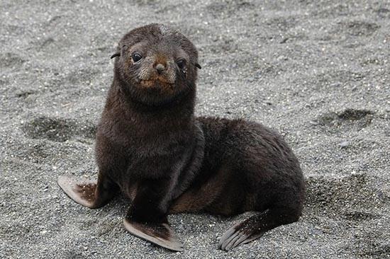 Αξιολάτρευτες φωτογραφίες ζώων (32)