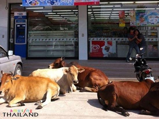 Εν τω μεταξύ στην Ταϊλάνδη (2)