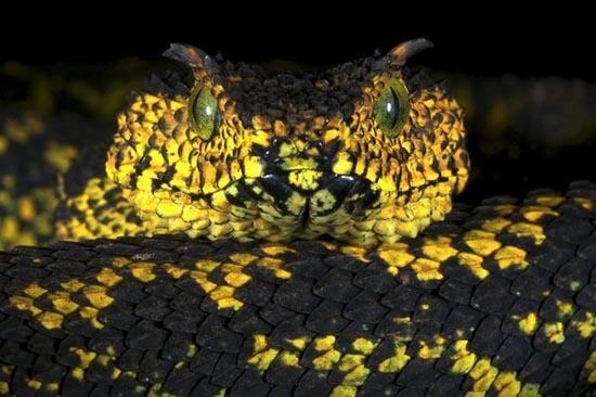 Ένα φίδι που το έλεγαν... Matilda (1)