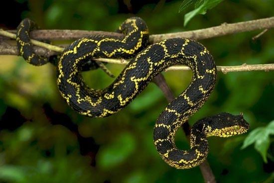 Ένα φίδι που το έλεγαν... Matilda (2)