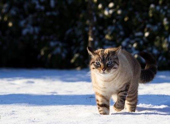 Γάτες στο χιόνι (1)