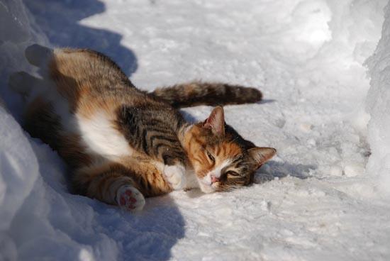 Γάτες στο χιόνι (8)