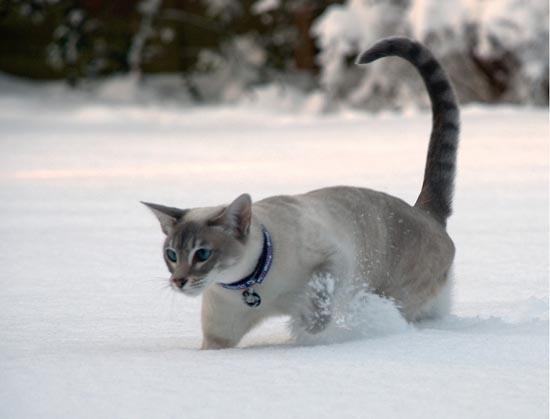 Γάτες στο χιόνι (10)
