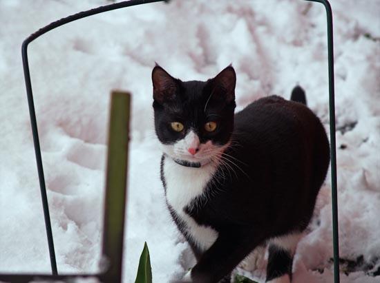 Γάτες στο χιόνι (12)