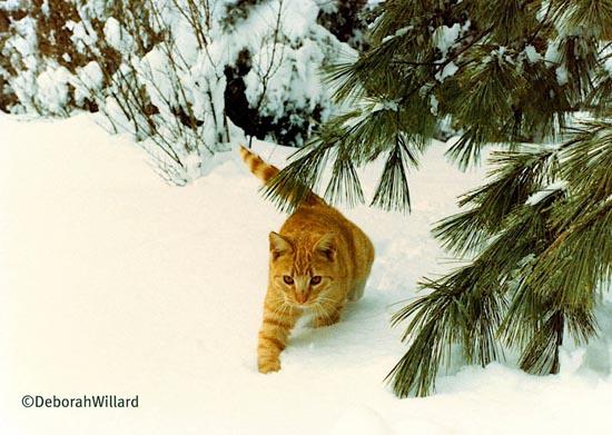 Γάτες στο χιόνι (13)