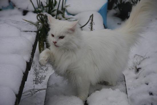 Γάτες στο χιόνι (20)