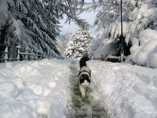 Γάτες στο χιόνι (22)
