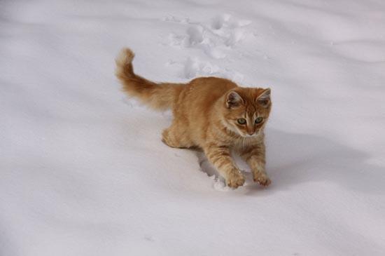 Γάτες στο χιόνι (23)