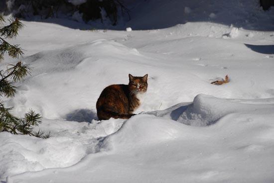 Γάτες στο χιόνι (24)