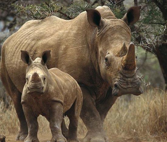 Υπέροχες φωτογραφίες ζώων (2)
