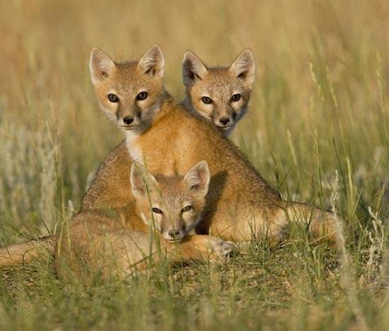 Υπέροχες φωτογραφίες ζώων (4)