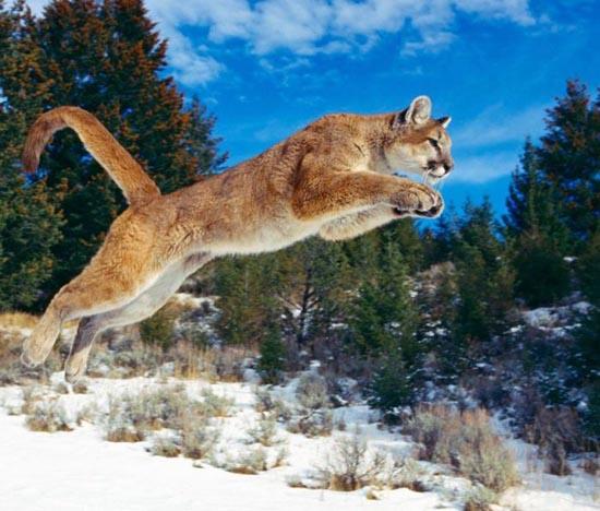 Υπέροχες φωτογραφίες ζώων (5)