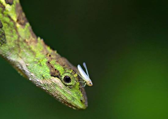 Υπέροχες φωτογραφίες ζώων (8)