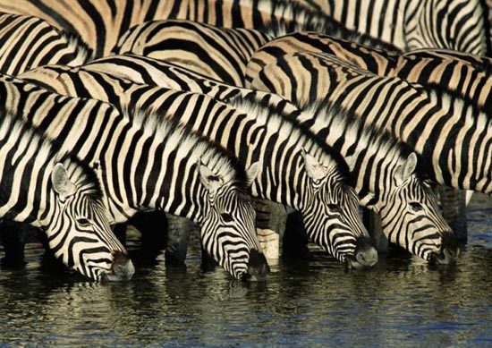 Υπέροχες φωτογραφίες ζώων (10)