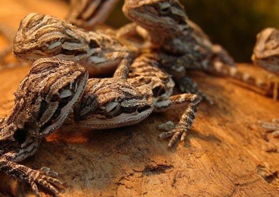 Υπέροχες φωτογραφίες ζώων (11)