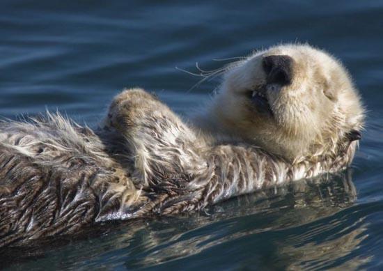 Υπέροχες φωτογραφίες ζώων (12)
