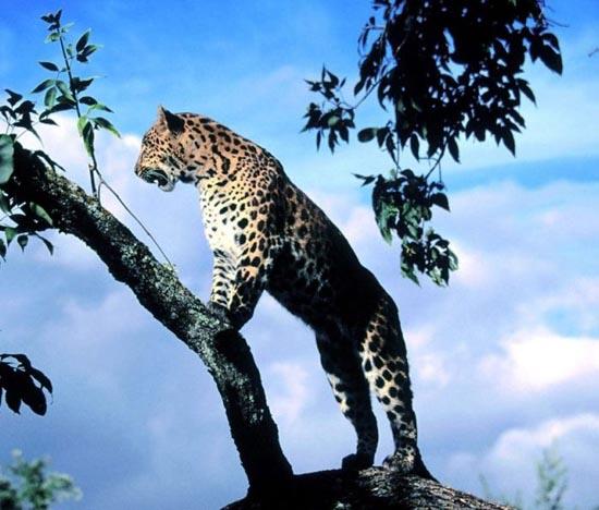 Υπέροχες φωτογραφίες ζώων (16)