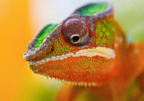 Υπέροχες φωτογραφίες ζώων (20)