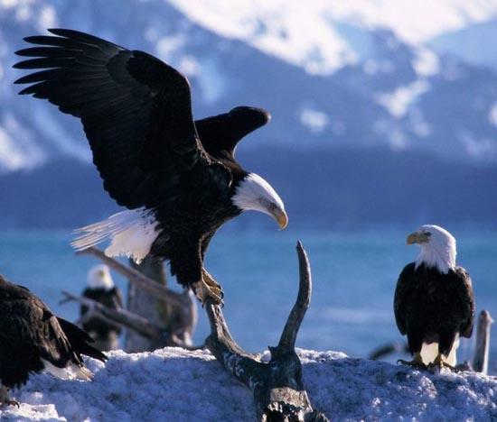 Υπέροχες φωτογραφίες ζώων (22)