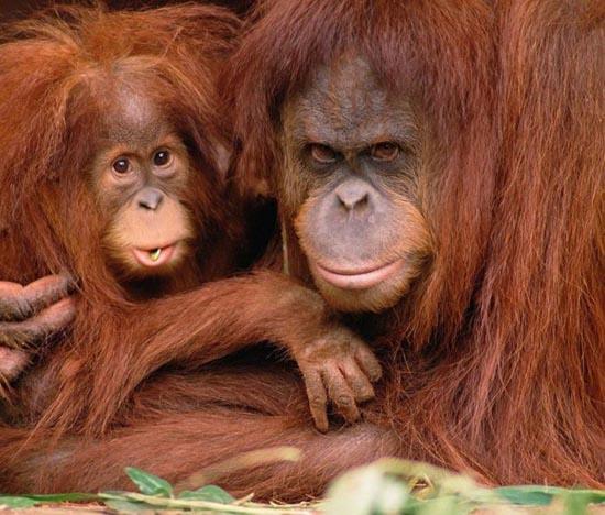 Υπέροχες φωτογραφίες ζώων (24)