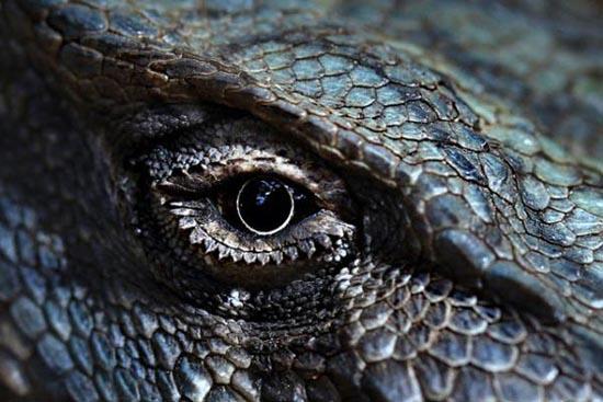 Mάτια ερπετών (3)