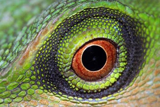 Mάτια ερπετών (5)