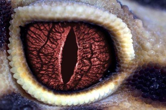 Mάτια ερπετών (7)