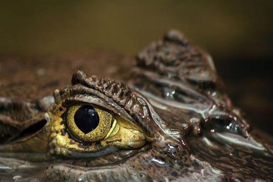 Mάτια ερπετών (8)