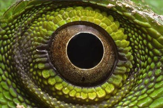 Mάτια ερπετών (12)