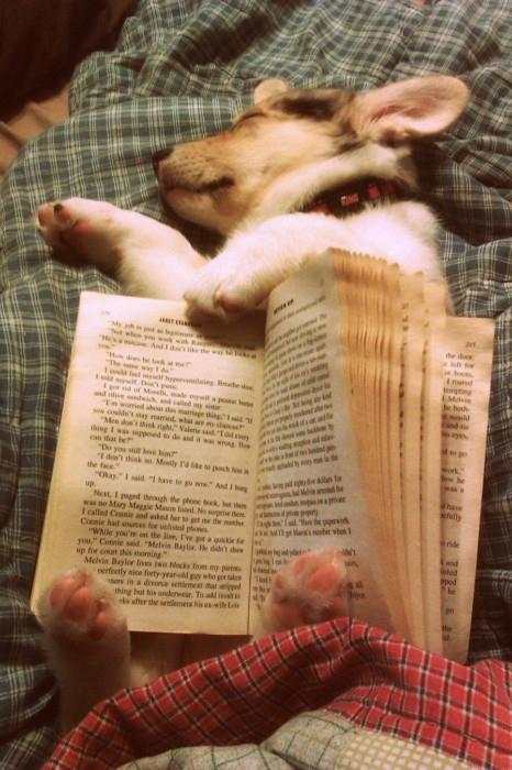 Φωτογραφία της ημέρας: Λίγο διάβασμα πριν τον ύπνο...