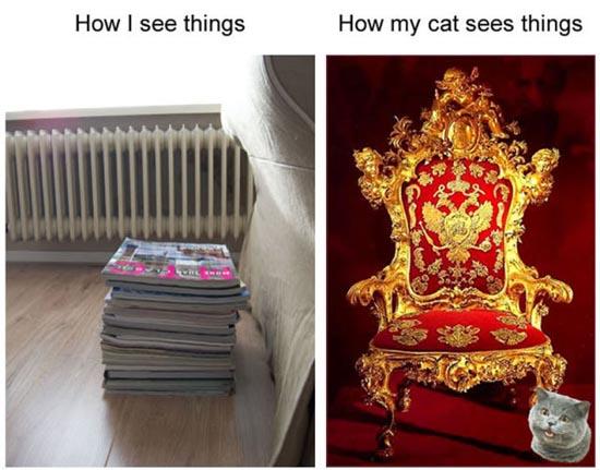 Τα πράγματα από την οπτική μιας γάτας (1)
