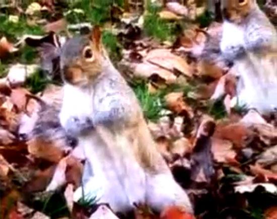 Σκίουρος χορεύει Michael Jackson