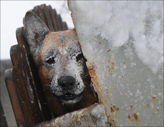 Τρομακτική χιονόπτωση στη Ρουμανία (5)