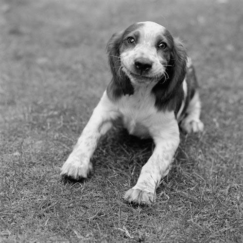 Χαρούμενοι σκύλοι (1)