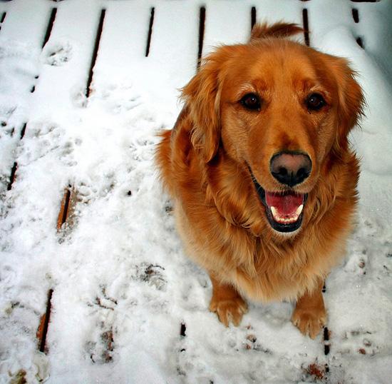 Χαρούμενοι σκύλοι (3)