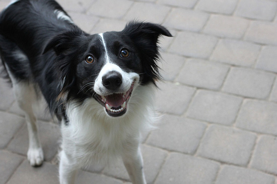 Χαρούμενοι σκύλοι (4)
