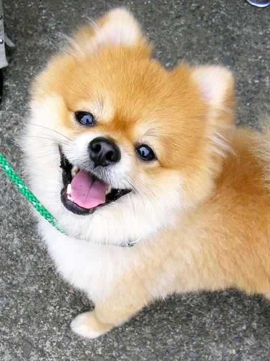 Χαρούμενοι σκύλοι (5)